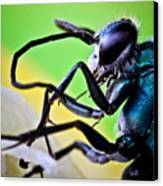 Blue Wasp On Fruit Canvas Print by Ryan Kelly