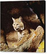 Bobcat Lynx Rufus Portrait On Rock Canvas Print by Gerry Ellis