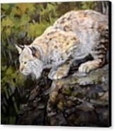 Bobcat Canvas Print by Mary Ann Cherry