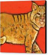 Bobcat Watching Canvas Print by Carol Suzanne Niebuhr