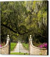 Boone Hall Plantation Canvas Print by Eggers   Photography