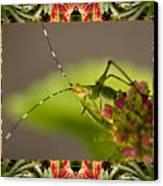 Bromeliad Grasshopper Canvas Print by Bell And Todd