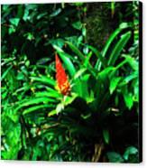 Bromeliads El Yunque  Canvas Print by Thomas R Fletcher