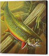 Brook Trout Cover Canvas Print by JQ Licensing