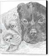 Brothers Canvas Print by DebiJeen Pencils