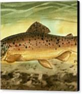 Brown Trout Canvas Print by Sean Seal