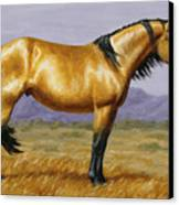 Buckskin Mustang Stallion Canvas Print by Crista Forest