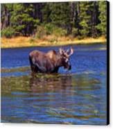 Bull Moose In The Mountains Canvas Print by Terril Heilman