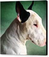 Bull Terrier On Green Canvas Print by Michael Tompsett