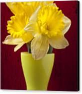 Bunch Of Daffodils Canvas Print by Garry Gay