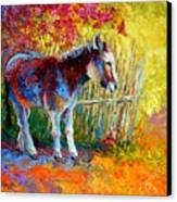 Burro And Bouganvillia Canvas Print by Marion Rose