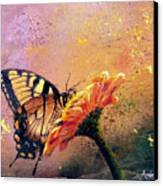 Butterfly Canvas Print by Andrew King