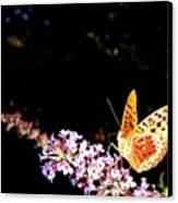 Butterfly Banquet 1 Canvas Print by Will Borden
