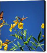 Butterfly In The Sonoran Desert Musuem Canvas Print by Donna Greene