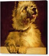 Cairn Terrier   Canvas Print by George Earl