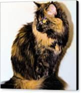 Calico Cats Canvas Print by Cheryl Poland