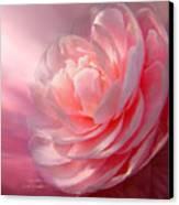 Camellia Canvas Print by Carol Cavalaris