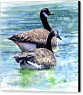 Canada Geese Canvas Print by John D Benson