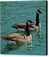Canadian Geese Canvas Print by Carol  Eliassen