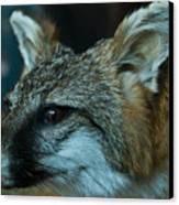 Canis Species Canvas Print by Douglas Barnett