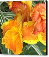 Canna Lilies Canvas Print by David Bearden