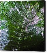 Canopy Of Ferns Canvas Print by Elizabeth Hoskinson