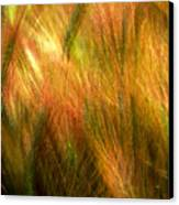 Cat Tails Canvas Print by Paul Wear