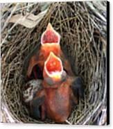 Cavernous Cardinals Canvas Print by Al Powell Photography USA