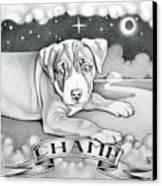 Champ Canvas Print by Robert Ball