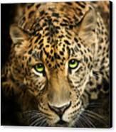 Cheetaro Canvas Print by Big Cat Rescue