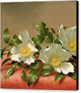 Cherokee Roses Canvas Print by Martin Johnson Heade