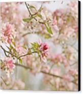 Cherry Blossom Delight Canvas Print by Kim Hojnacki