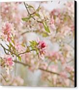 Cherry Blossom Delight Canvas Print by Kim Hojnacki