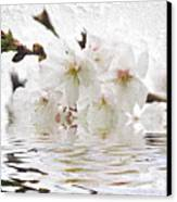 Cherry Blossom In Water Canvas Print by Elena Elisseeva