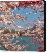 Cherry Blossoms On The Edge Of The Tidal Basin Three Canvas Print by Susan Isakson