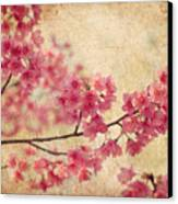 Cherry Blossoms Canvas Print by Rich Leighton