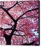 Cherry Tree Canvas Print by Mitch Cat
