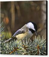 Chickadee-10 Canvas Print by Robert Pearson