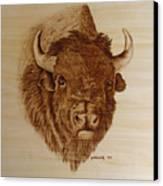 Chief Canvas Print by Jo Schwartz