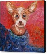 Chihuahua Blues Canvas Print by Nadine Rippelmeyer