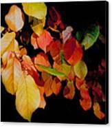 Chokecherry Leaves Canvas Print by Terril Heilman
