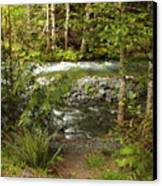 Clear Mountain Stream Canvas Print by Carol Groenen