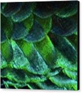 Close Up Of Peacock Feathers Canvas Print by MadmàT