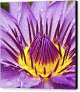Close Up Of Violet Water Lily Canvas Print by Tosporn Preede