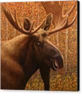 Colorado Moose Canvas Print by James W Johnson