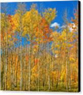 Colorful Colorado Autumn Landscape Canvas Print by James BO  Insogna