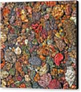 Colorful Rocks In Stream Bed Montana Canvas Print by Jennie Marie Schell