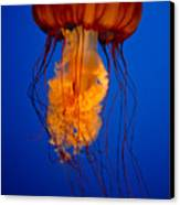 Colours Of The Jelly Fish Canvas Print by Naman Imagery