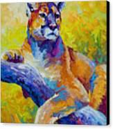 Cougar Portrait I Canvas Print by Marion Rose