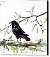 Crow On Branch Canvas Print by Carolyn Doe